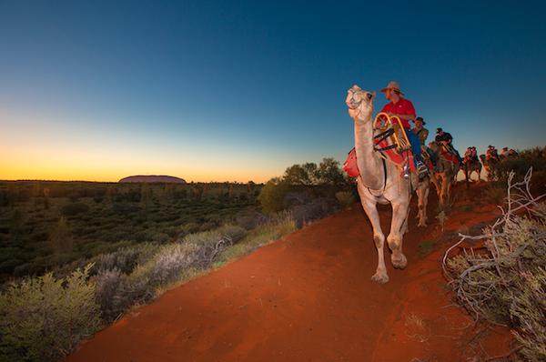 Uluru%20camel%20tour