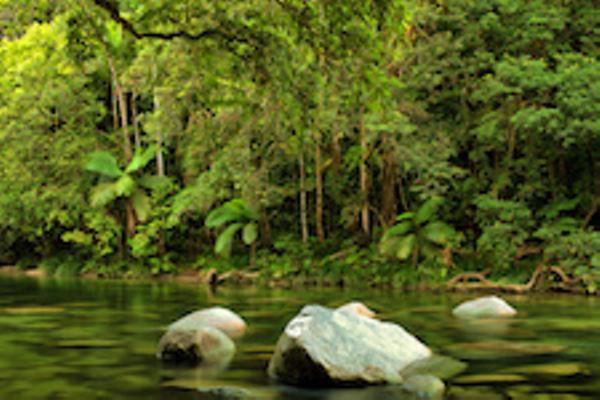 Forêt tropicale du Daintree