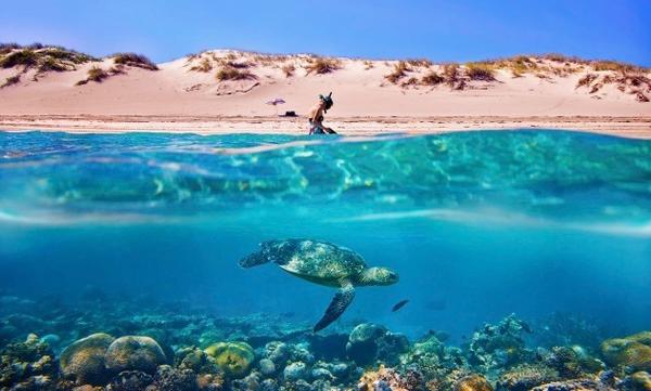 Plongée dans le Ningaloo Reef