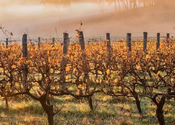 vineyard-music-weekend.jpg