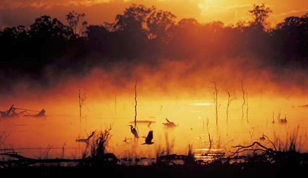 wetlands-birds-mareeba-billabong.jpg