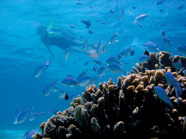 australie-exmouth-sal-salis-ningaloo-reef-snorkeling-1.jpg