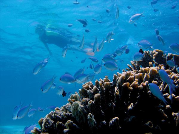 australie-exmouth-sal-salis-ningaloo-reef-snorkeling.jpg