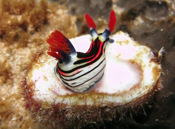 australie_plongee_ningaloo_reef_corail.jpg