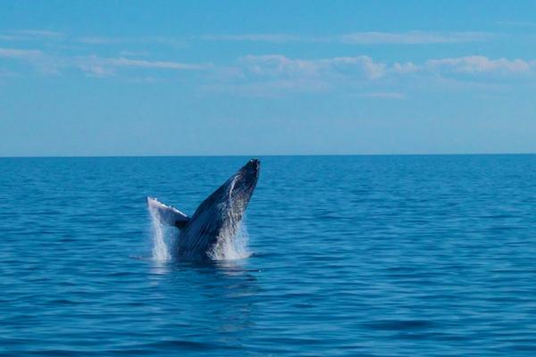 baleine2055.jpg