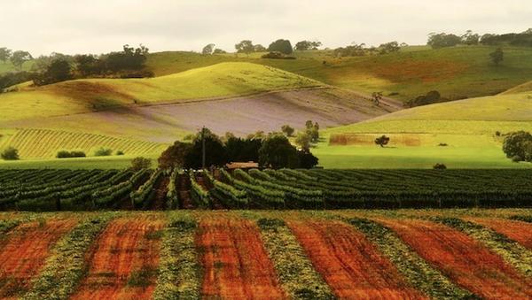 barossalandscape-4.jpg