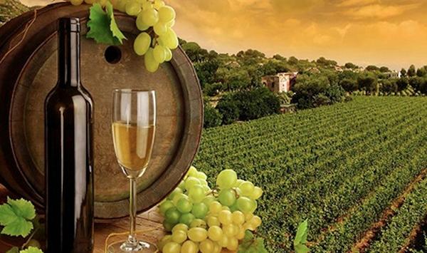 hunter-valley-wineries-1.jpg
