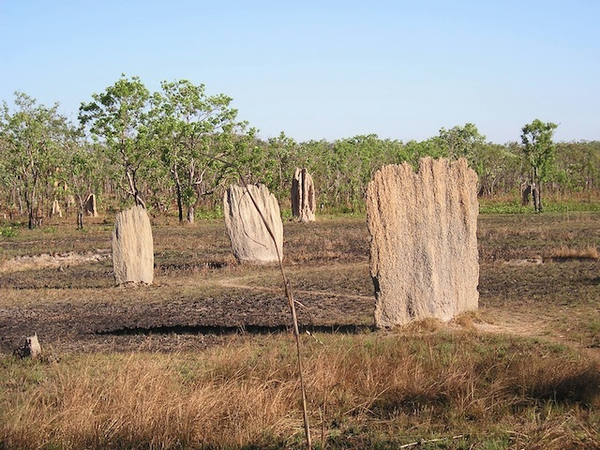 litchfield_national_park-termite_mounds.jpg