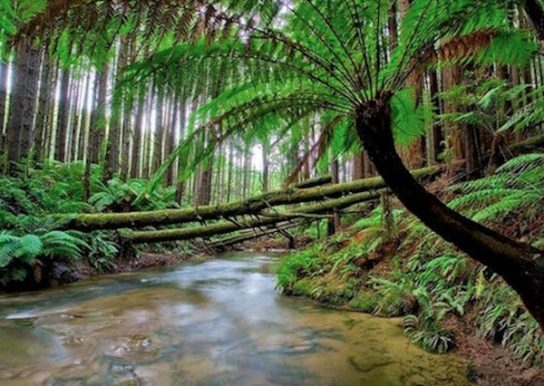 otways-rain-forest.jpg