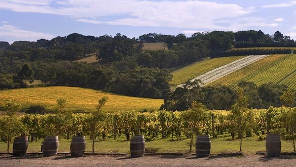 vigne-mornington-peninsula-4.jpg